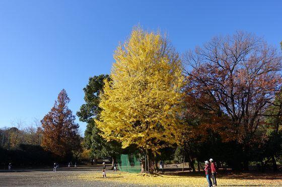 戸山公園 紅葉 見頃