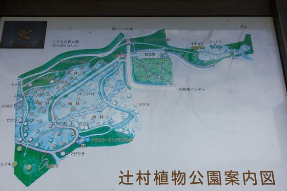 辻村植物園 園内図