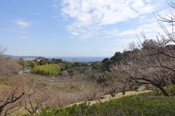 辻村植物園 梅