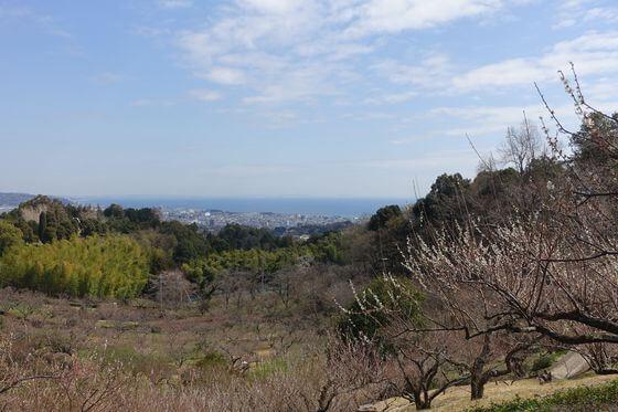 小田原市 辻村植物園 梅