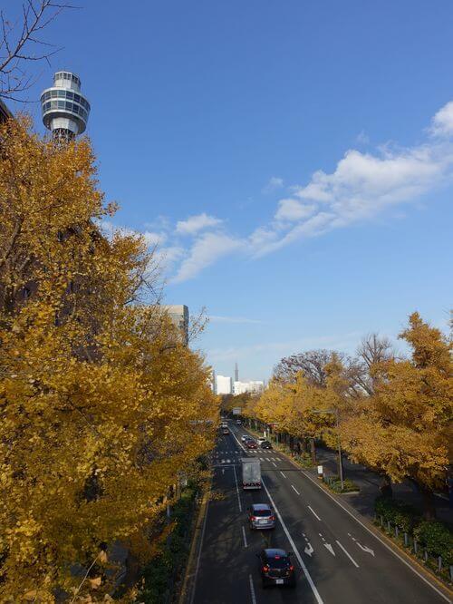 山下公園 銀杏並木