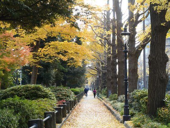 横浜 山下公園 銀杏並木