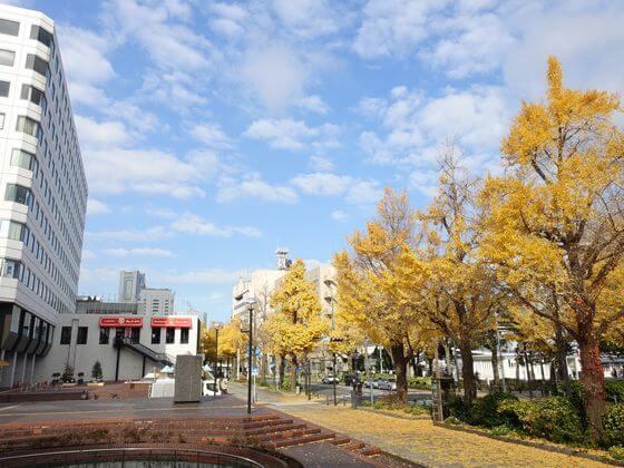 横浜 山下公園 イチョウ並木