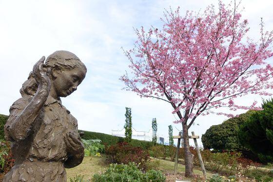 河津桜 山下公園