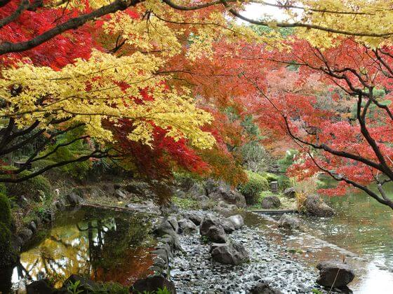 横浜公園 紅葉