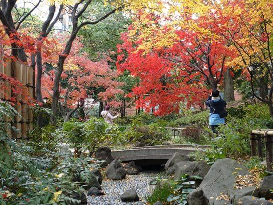 横浜公園 紅葉 見頃