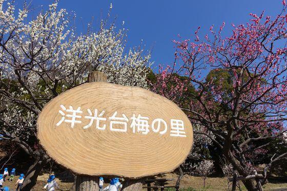 洋光台西公園 梅の里まつり