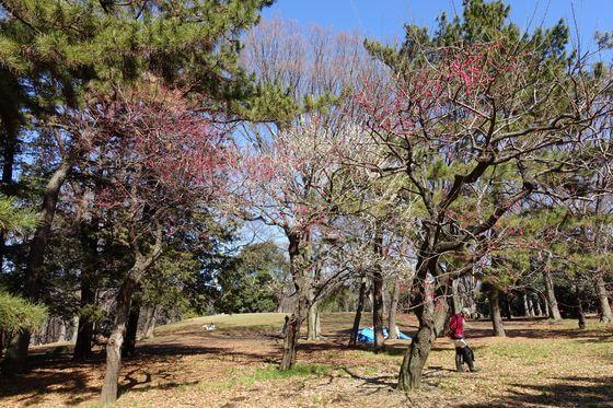 代々木公園 梅