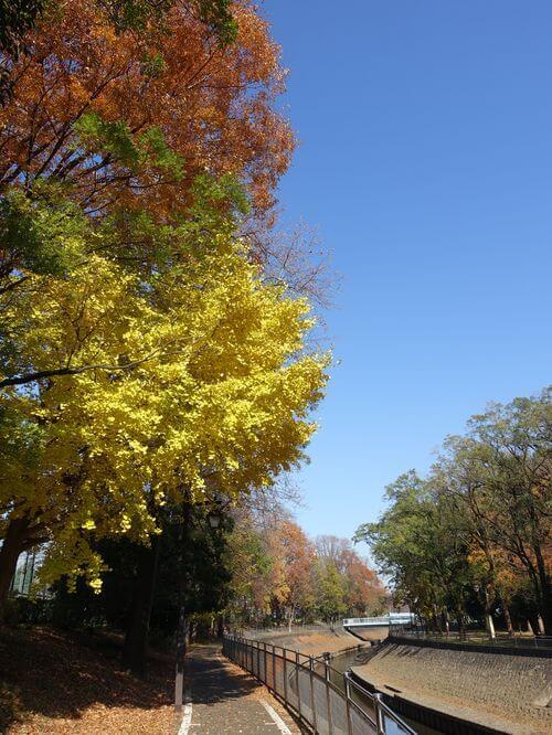 杉並区 善福寺川緑地 紅葉
