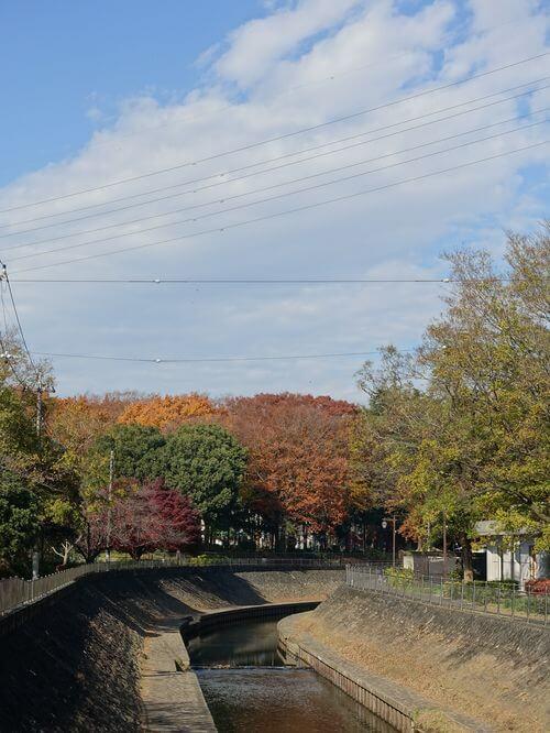 善福寺川緑地 杉並区 紅葉