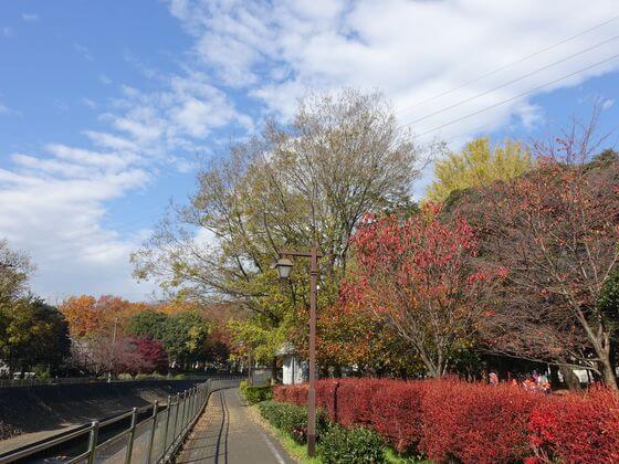善福寺川緑地 紅葉