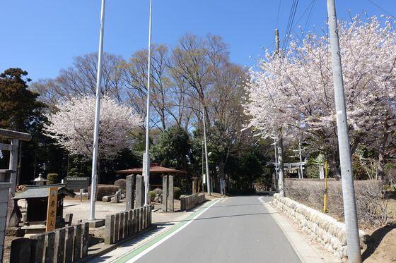 高尾氷川神社 桜