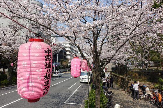 新井薬師公園 桜 ライトアップ