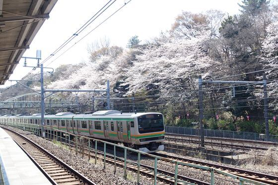 王子 飛鳥山公園 桜