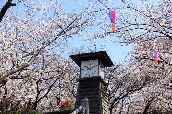 飛鳥山公園 桜 ライトアップ