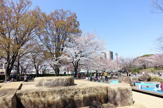 北区 飛鳥山公園 桜