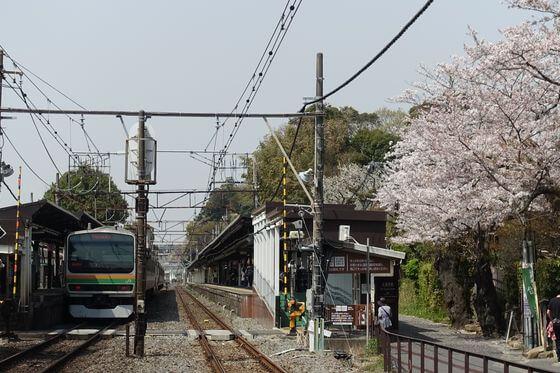 北鎌倉駅 桜