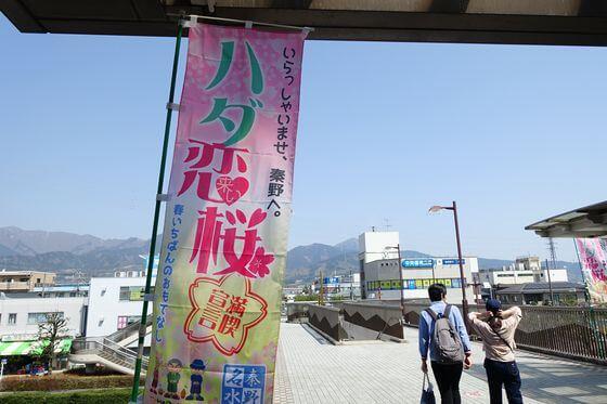 秦野カルチャーパーク 桜 ライトアップ