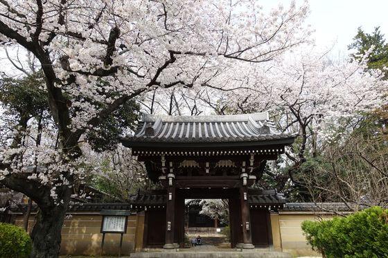 雑司が谷 法明寺 桜