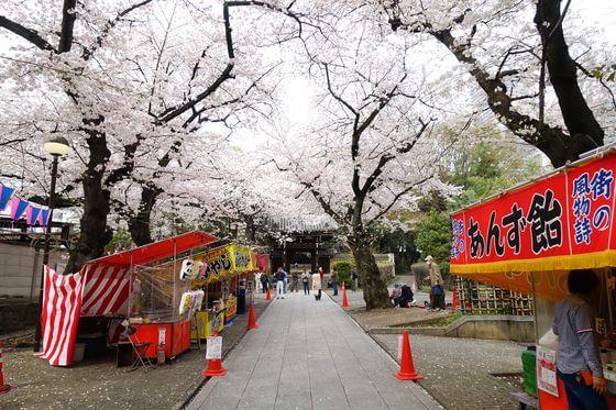 池袋 法明寺 桜
