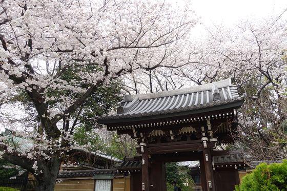 法明寺 桜