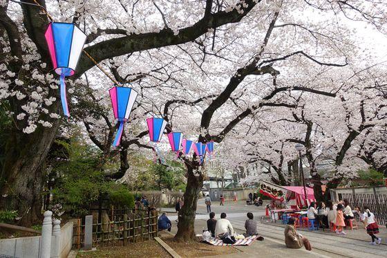 法明寺 桜 ライトアップ