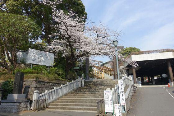 横浜 皇大神宮 桜