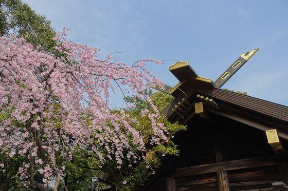 伊勢山皇大神宮 枝垂れ桜