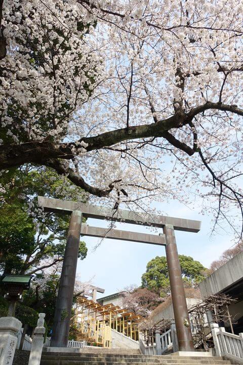 皇大神宮 横浜 桜