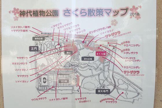 神代植物公園 桜 場所