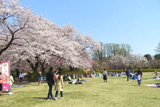 神代植物公園 お花見