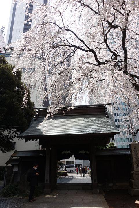 新宿 枝垂れ桜