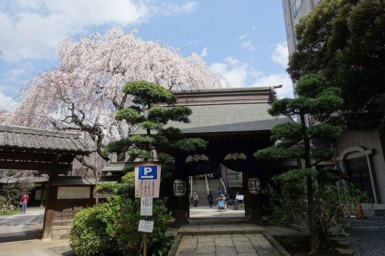 常圓寺 新宿 桜