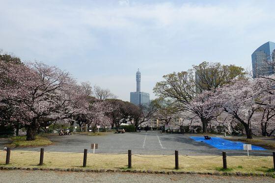 横浜 掃部山公園 桜