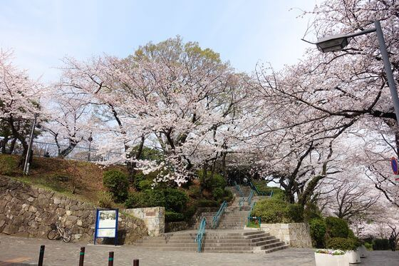 掃部山公園 桜 見頃