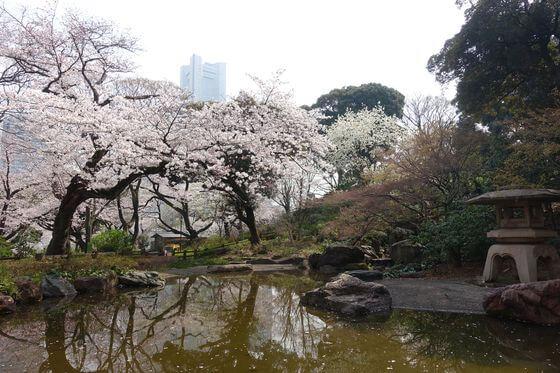 掃部山公園 日本庭園 桜