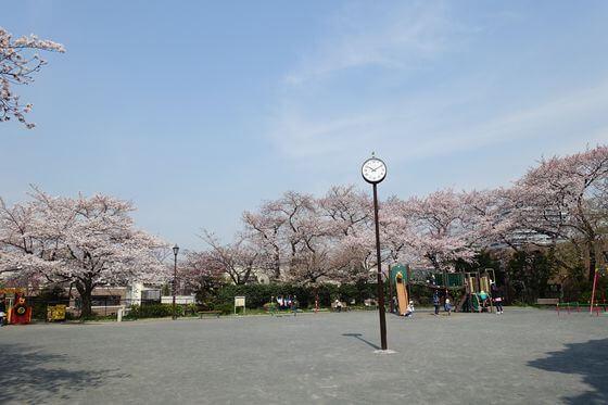 掃部山公園 遊具ひろば 桜