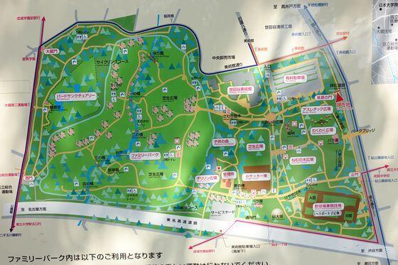 砧公園 桜 場所