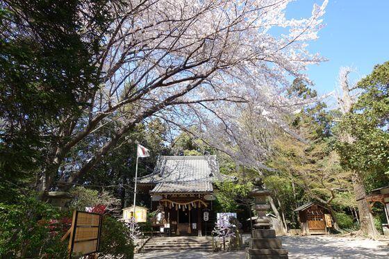 北本氷川神社 桜