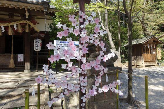 北本氷川神社 桜みくじ