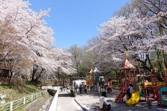 北本市子供公園 花見