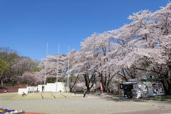 北本市子供公園 桜 見頃