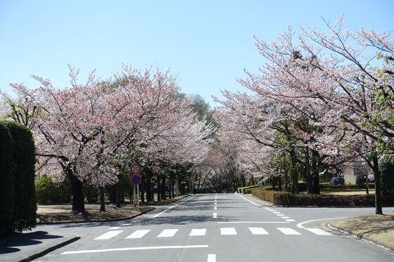 桜 北里大学メディカルセンター
