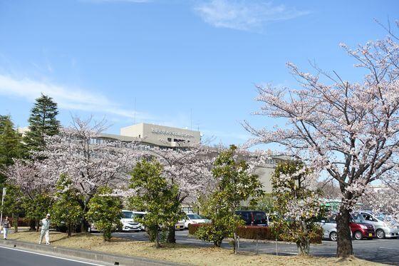 北里大学メディカルセンター 桜