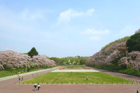こどもの国 桜