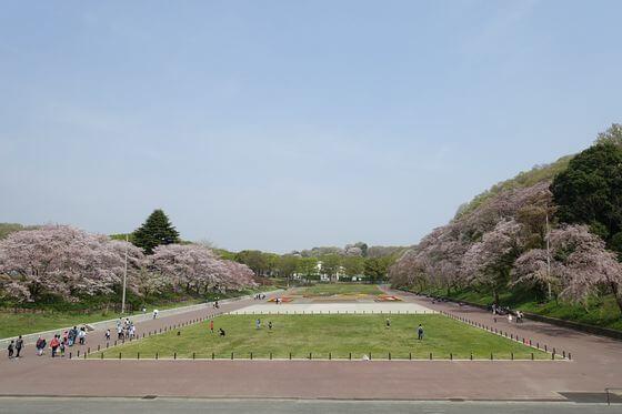 こどもの国 中央広場 桜