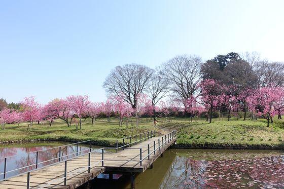 茨城 花桃