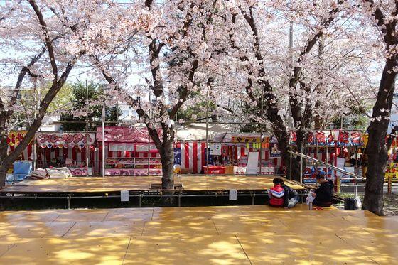 熊谷桜堤 花見