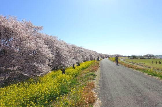 熊谷さくら祭 花見