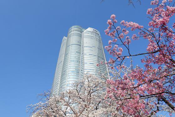 毛利庭園 桜 見頃
